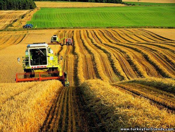 Американский инвестор: Украине следует максимально использовать аграрный потенциал