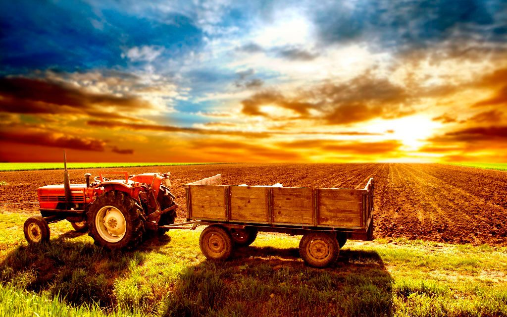 Названо ТОП-5 проблем сільського господарства України