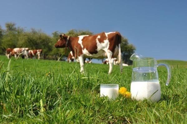 Украинские молочники экспортировали продукции на $214 млн