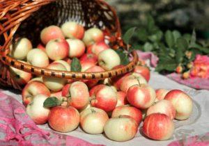 Україна встановила рекорд з експорту яблук