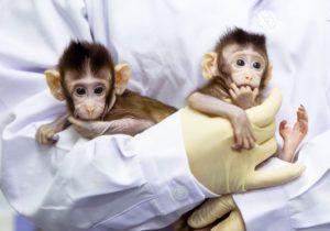 Вчені вперше успішно клонували мавп